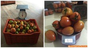 weighing